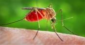 Chuyện gì thật sự xảy ra khi một con muỗi đốt người?