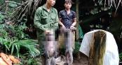 Nhóm thợ săn giết voọc xám mang thai, nguy cơ đối diện bị phạt 2 tỷ