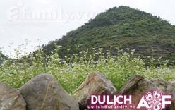 Ngỡ ngàng Tam giác mạch trái mùa trên cao nguyên đá