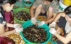 Kho thuốc vô tận trên ruộng đồng Việt Nam