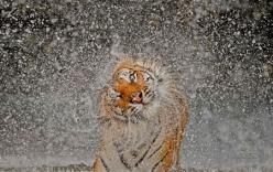 Những bức ảnh tự nhiên tuyệt đẹp đoạt giải năm 2012