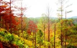 Lâm Đồng: Chi trả dịch vụ môi trường rừng đã có kết quả