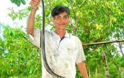 Thầy trị rắn ở đại ngàn U Minh với lời nguyền về thịt rắn