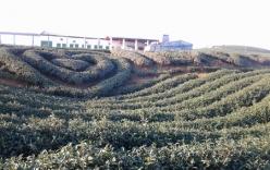 Mộc Châu (Sơn La) - nơi bình yên mùa xuân về