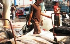 Nguy cơ mất thương hiệu cá ngừ Việt Nam