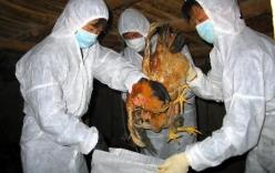 Phát hiện gia cầm nhiễm virus H7 tại Việt Nam