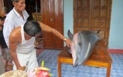 Cá voi 200kg mắc cạn sau 6 lần được cứu
