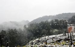 Nhiệt độ giảm xuống gần 0 độ, Sa Pa lại phủ trắng tuyết