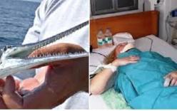 Cận cảnh loài cá nhái tấn công du khách ở Nha Trang