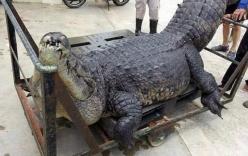 Điều tra cái chết bí ẩn của cá sấu khổng lồ