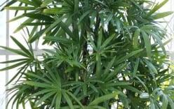 Những loại cây làm sạch không khí cực tốt nên trồng trong nhà