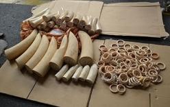 Lô ngà voi trị giá 4 tỷ đồng, được phù phép thành thực phẩm