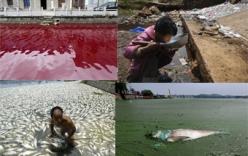 ô nhiễm môi trường - Tin tuc Hình ảnh Video Clip MỚI NHẤT về ô nhiễm môi trường