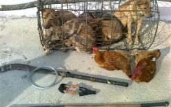 Clip ăn trộm chó khiến dân mạng nổi giận