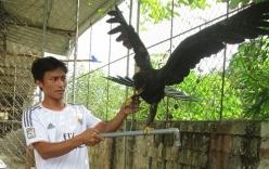 Đại bàng đen bay vào nhà dân, được trả giá 5.000 USD