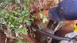 Kinh hãi dùng tay không bắt rắn hổ chúa gần 2 mét trong hang