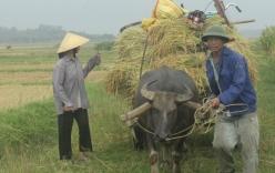 Cuộc sống cơ cực của bố mẹ Công Phượng U19 Việt Nam