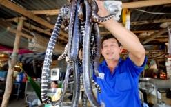 Chùm ảnh cực độc về chợ chuyên rắn, rùa chỉ có trong mùa lũ