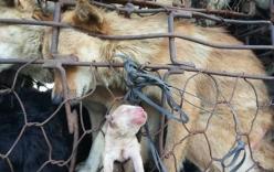 Hình ảnh chú chó con được sinh trên đường đến lò mổ gây xúc động