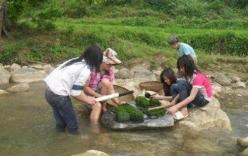 Bí ẩn về thung lũng trường sinh ở Việt Nam và món ăn từ loài kỳ thảo