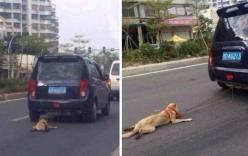 Phẫn nộ cảnh kéo lê chú chó trên đường đằng sau ôtô