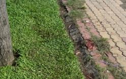 Thông tin mới vụ giết người, vứt xác phi tang rúng động Sài Gòn