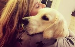19 điều về tình yêu từ những bức ảnh loài chó