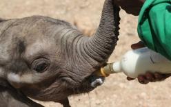 Video: Cứu sống voi con khỏi giếng nước sâu tại Kenya