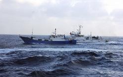 """Tại sao ngư dân Trung Quốc cứ lao vào vùng biển """"nóng""""?"""
