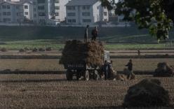 Xem cảnh lao động trên ruộng đồng của nông dân Triều Tiên