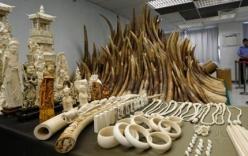 Báo Mỹ: Quan chức dùng máy bay của ông Tập Cận Bình buôn lậu ngà voi