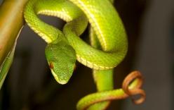 Công an xác minh thông tin kẻ lạ mặt thả rắn lục đuôi đỏ cắn người