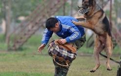 Clip: Tận mắt xem cảnh huấn luyện chó nghiệp vụ