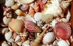Video tử vong do ăn ốc biển có độc ở Phú Yên