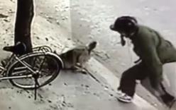 Trộm chó táo tợn bằng súng điện giữa ban ngày