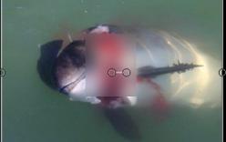 Ám ảnh khoảnh khắc hải cẩu xám xẻ thịt cá heo