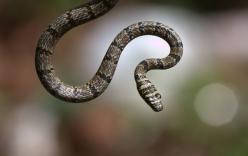 Những loài rắn kỳ lạ nhất hành tinh