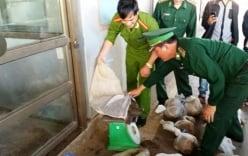 Bản tin 113 – sáng 28/11: Hàng chục kg động vật hoang dã trong xe khách…