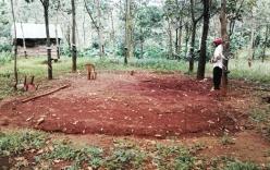Xác chết bí ẩn trong hố sâu rừng cao su