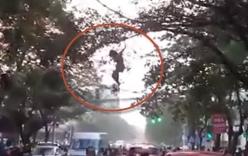 Cô gái đu cây như Tazan giữa phố Hà Nội