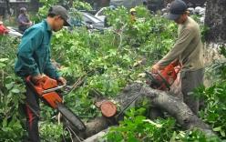 Cây xanh 190 tuyến phố tại Hà Nội bị chặt hạ, thay thế