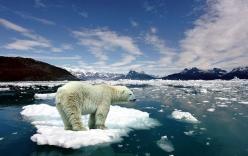 80% lượng băng ở Bắc cực sẽ biến mất trong 30 năm tới
