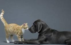 Đời sống - Chú chó nghĩa hiệp cứu kẻ thù không đội trời chung