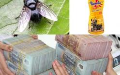 """Vụ """"con ruồi nửa tỷ đồng"""":"""