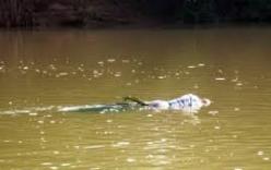 Hoảng hốt phát hiện một thi thể phụ nữ trôi sông