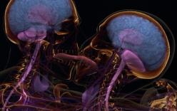 Tình yêu khiến bộ não con người thay đổi như thế nào?