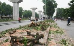 Chặt cây Hà Nội: Anh em GS Nguyễn Lân Dũng