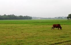 Một phụ nữ mất tích bí ẩn trong lúc đi chăn bò