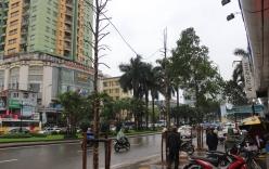 Xôn xao cây trên đường Nguyễn Chí Thanh ra hoa sau 1 đêm