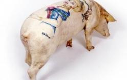 Da lợn xăm hình giá 1,5 tỉ đồng